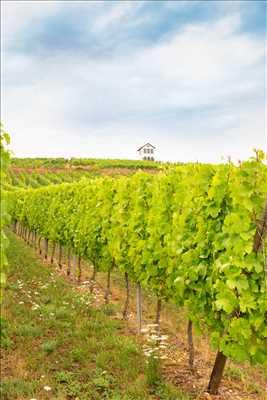 Photo Producteur de vin n°330 à Strasbourg par Alsace Willm