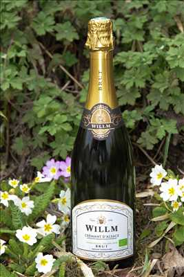 Photo Producteur de vin n°332 zone Bas Rhin par Alsace Willm