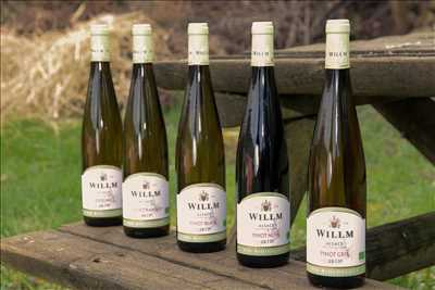 Exemple Producteur de vin n°333 zone Bas Rhin par Alsace Willm