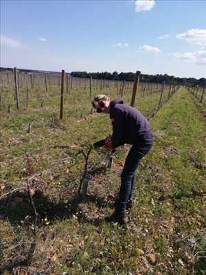 Photo Producteur de vin n°494 à Nîmes par Diane
