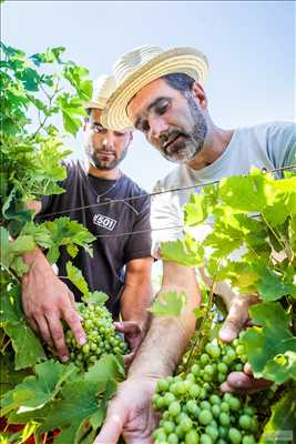 Photo Producteur de vin n°508 zone Tarn par SAS ALBERT ET FILS - Domaine de Labarthe