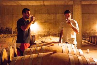 Exemple Producteur de vin n°509 zone Tarn par SAS ALBERT ET FILS - Domaine de Labarthe